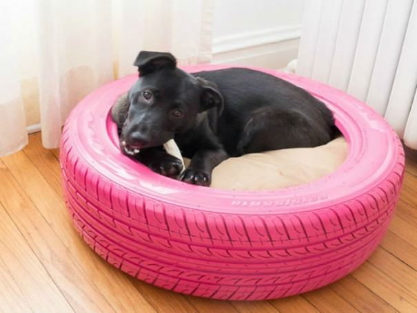 dog-in-tire
