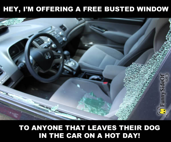 busted_window_dog